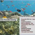 ISLA - Ekosistem Terumbu Karang